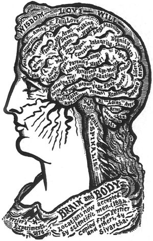 Brain and Body_300